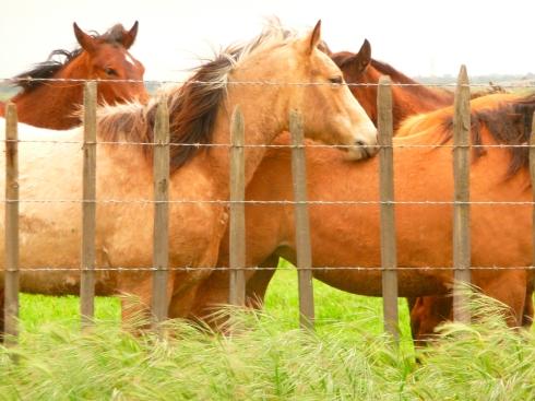Four Horses © 2011 afroditi katsikis