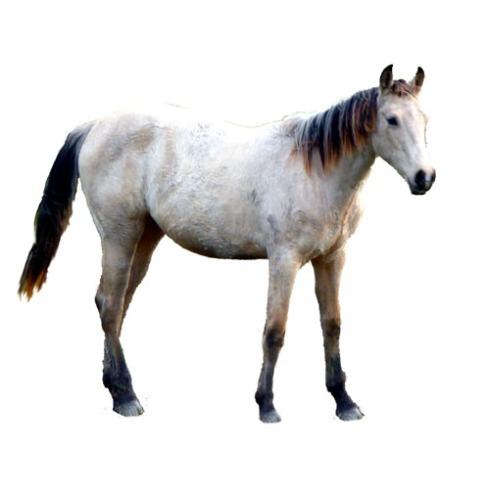 P1110086 single horse blank bkgrnd