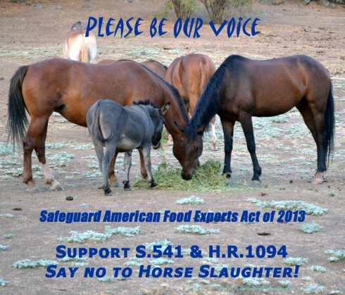 Please be our voice! Safeguard American Food Safety Act of 2013 S.541 HR.1094
